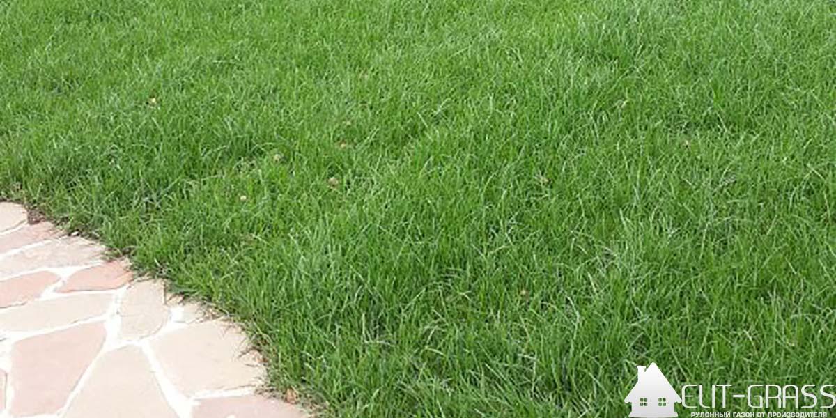 Как сохранить здоровый вид лужайки?