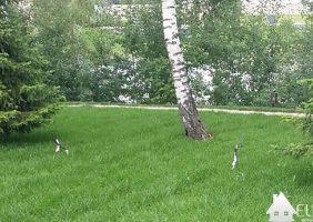 Газоны в ландшафте садового участка