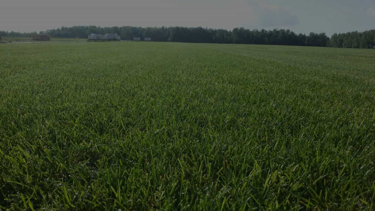 slider-элит-грасс рулонный газон