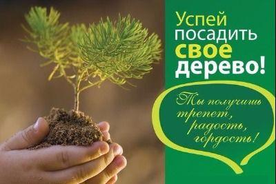 Посади дерево акция