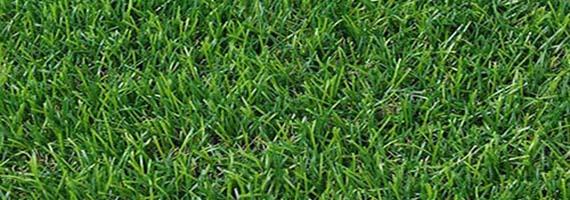 Рулонный газон стандартный люкс