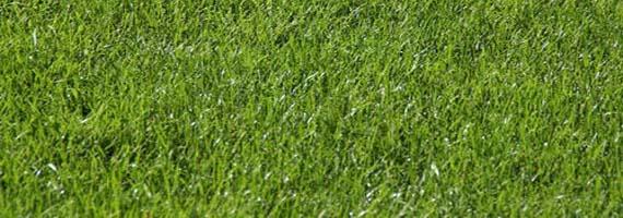 Рулонный газон универсальный