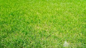 Рулонный газон Стандартный