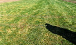 фото поля рулонного газона